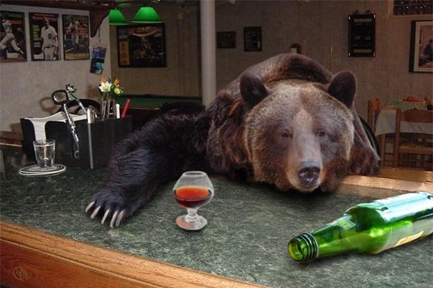 drunk-bear1.jpg